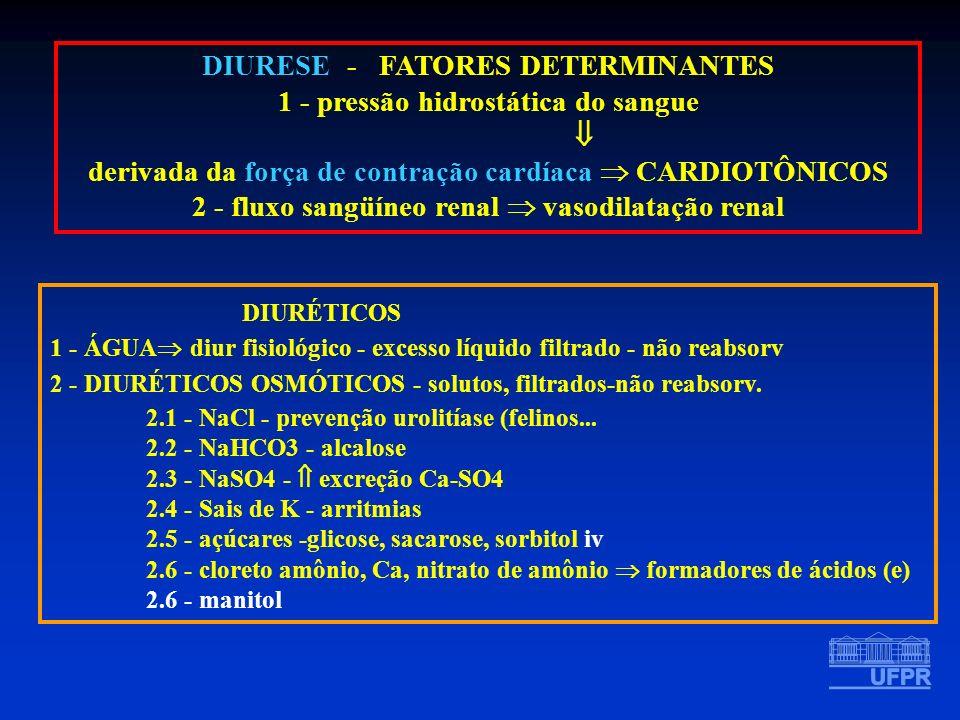 DIURÉTICOS DIURESE - FATORES DETERMINANTES