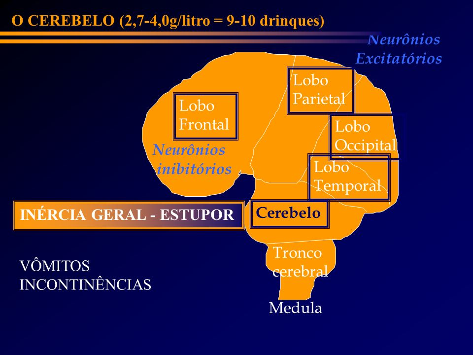 O CEREBELO (2,7-4,0g/litro = 9-10 drinques)