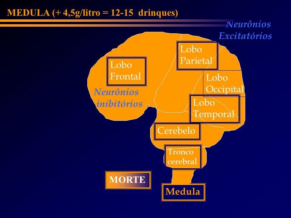MEDULA (+ 4,5g/litro = 12-15 drinques) Neurônios Excitatórios