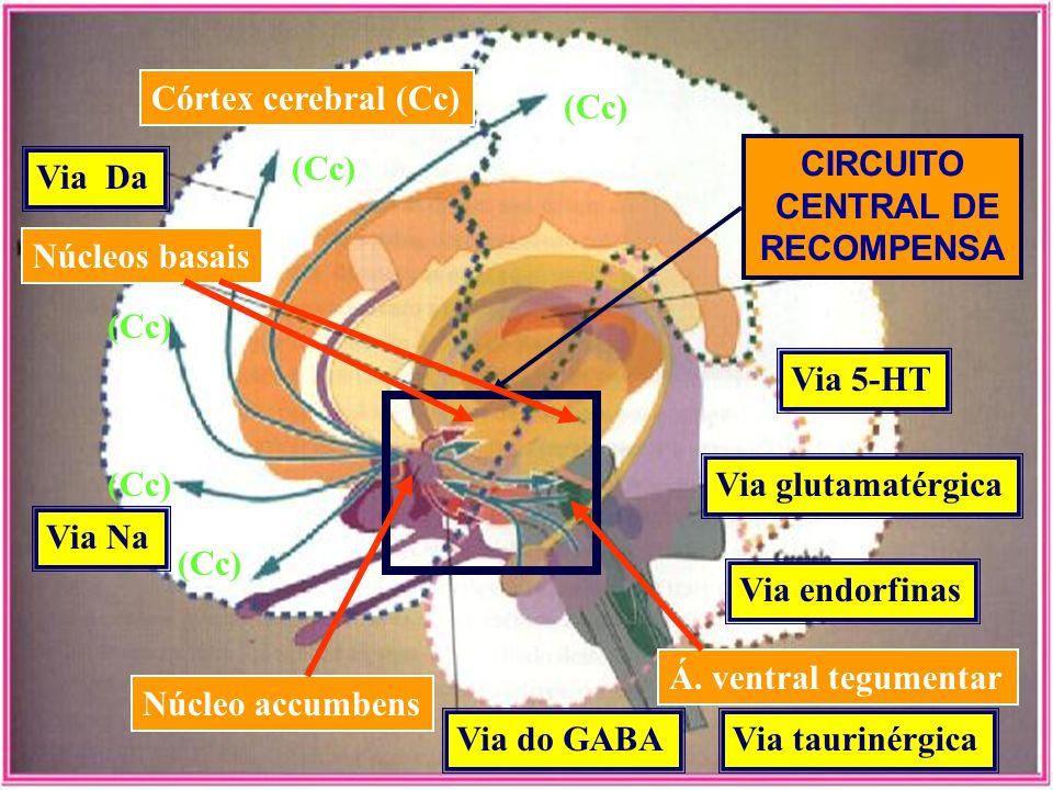 Córtex cerebral (Cc) (Cc) (Cc) CIRCUITO. CENTRAL DE. RECOMPENSA. Via Da. Núcleos basais. (Cc)