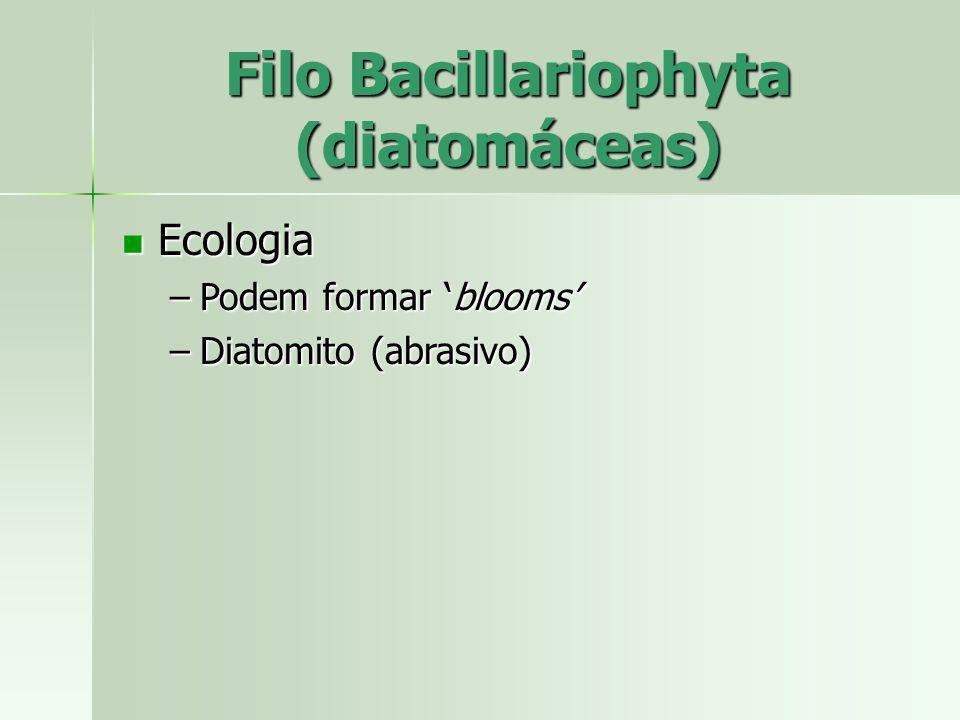 Filo Bacillariophyta (diatomáceas)