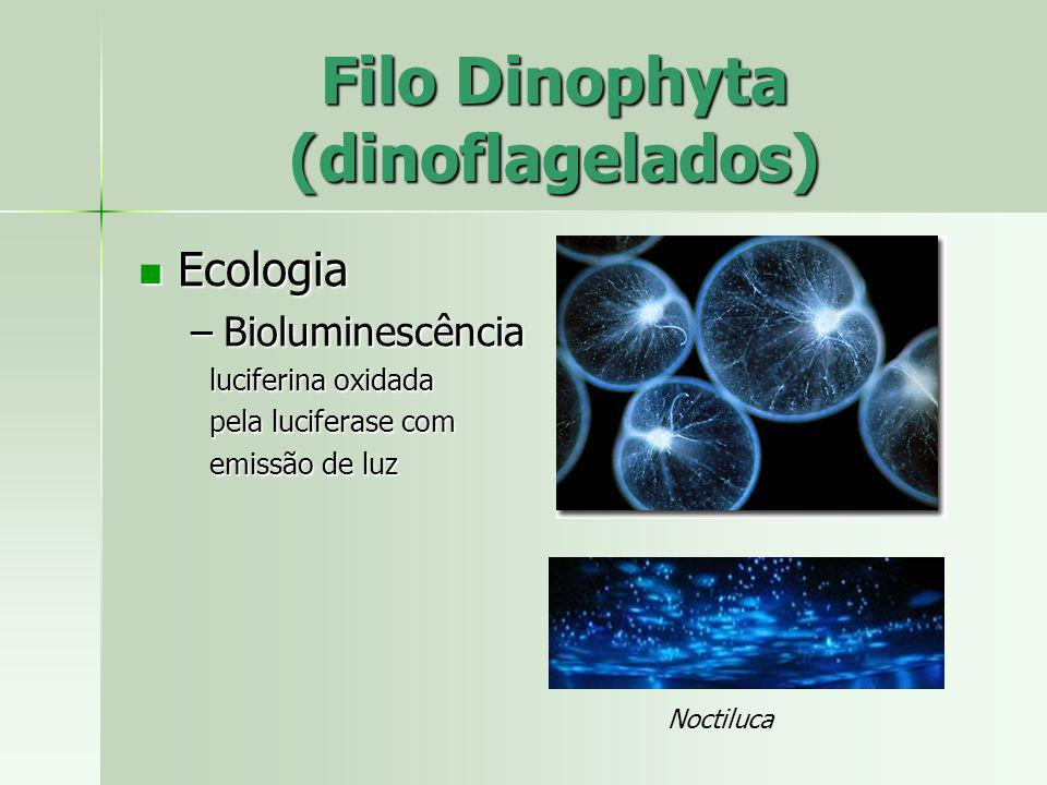 Filo Dinophyta (dinoflagelados)