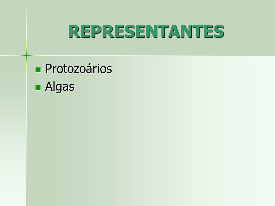 REPRESENTANTES Protozoários Algas
