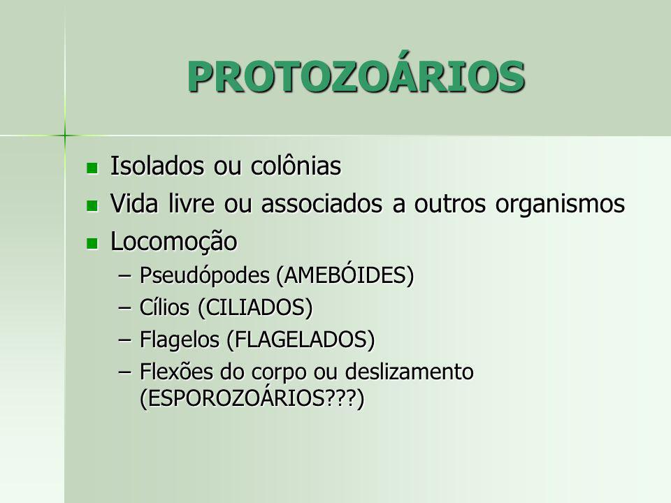 PROTOZOÁRIOS Isolados ou colônias