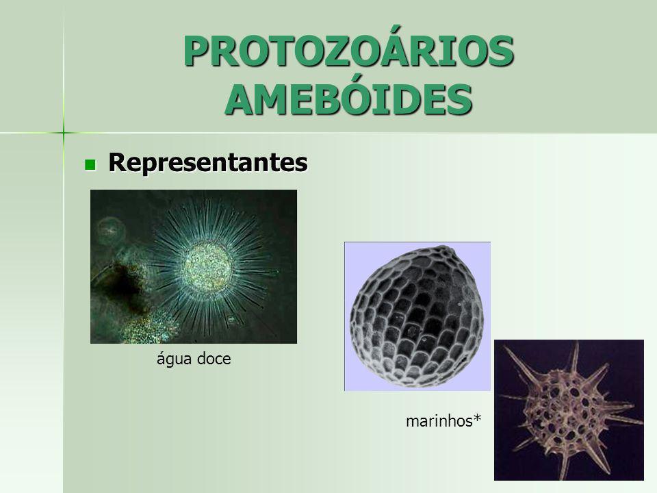 PROTOZOÁRIOS AMEBÓIDES