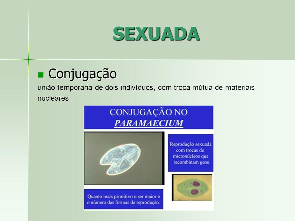 SEXUADA Conjugação união temporária de dois indivíduos, com troca mútua de materiais nucleares