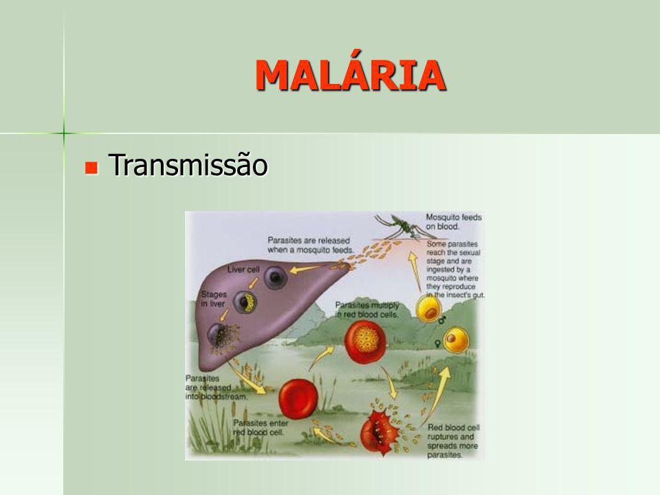 MALÁRIA Transmissão