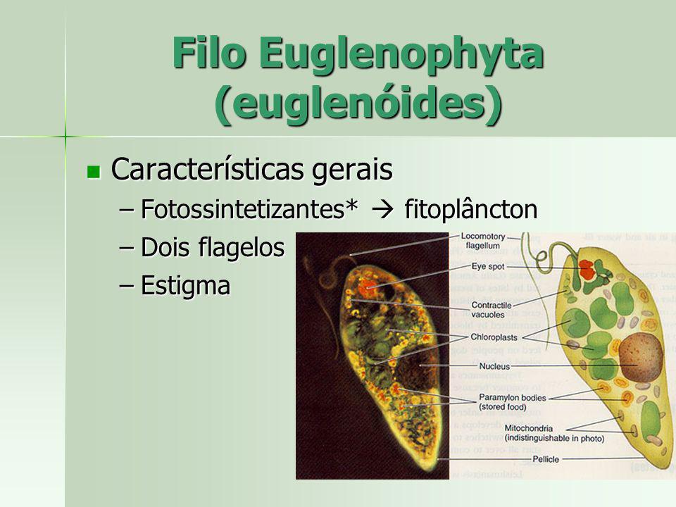 Filo Euglenophyta (euglenóides)