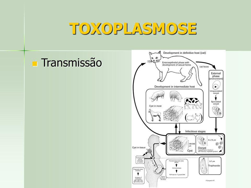 TOXOPLASMOSE Transmissão