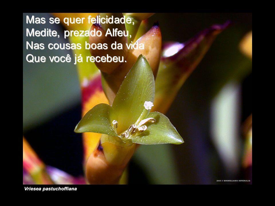 Mas se quer felicidade, Medite, prezado Alfeu, Nas cousas boas da vida Que você já recebeu.