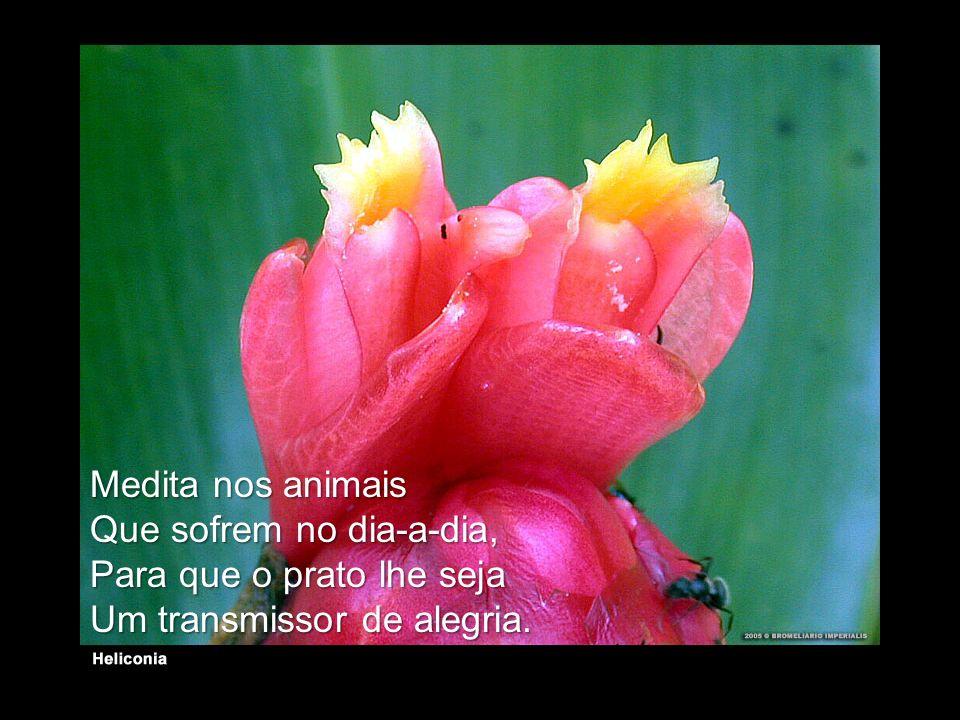 Medita nos animais Que sofrem no dia-a-dia, Para que o prato lhe seja Um transmissor de alegria.