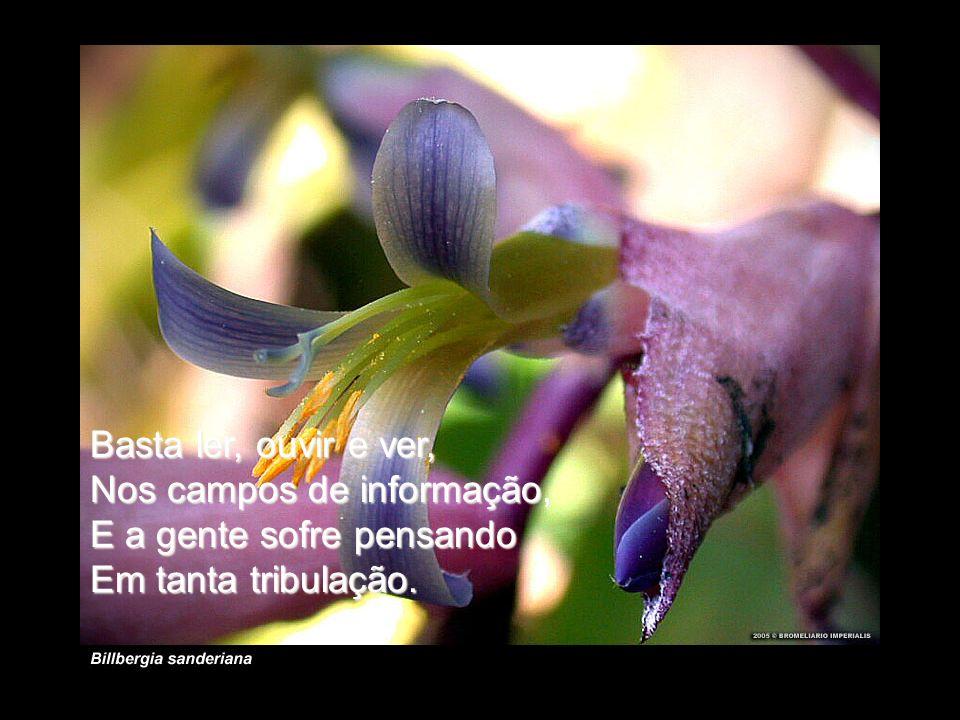 Basta ler, ouvir e ver, Nos campos de informação, E a gente sofre pensando Em tanta tribulação.