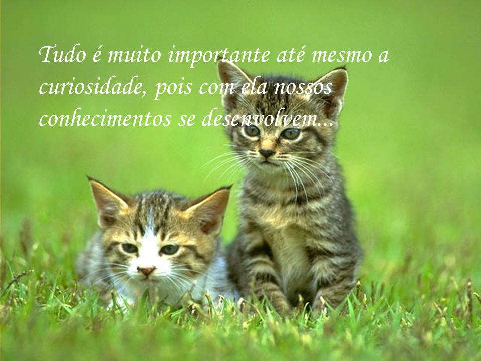 Tudo é muito importante até mesmo a curiosidade, pois com ela nossos conhecimentos se desenvolvem...