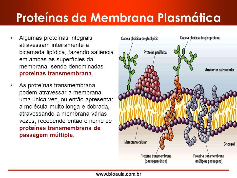 Proteínas da Membrana Plasmática