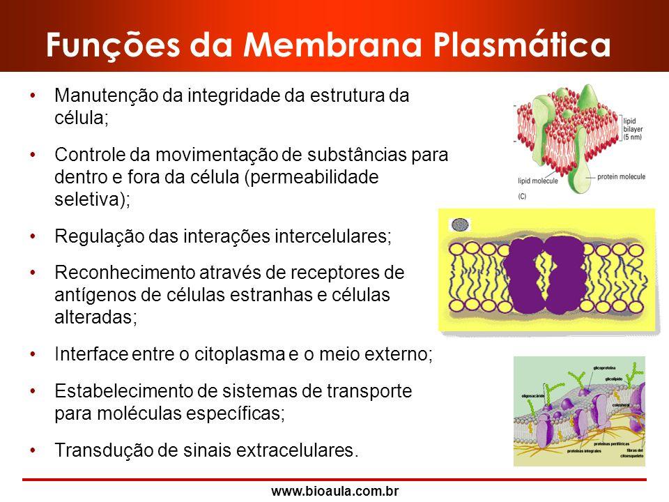 Funções da Membrana Plasmática