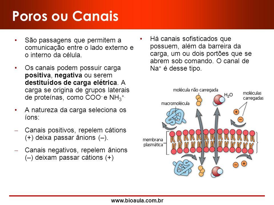 Poros ou CanaisSão passagens que permitem a comunicação entre o lado externo e o interno da célula.
