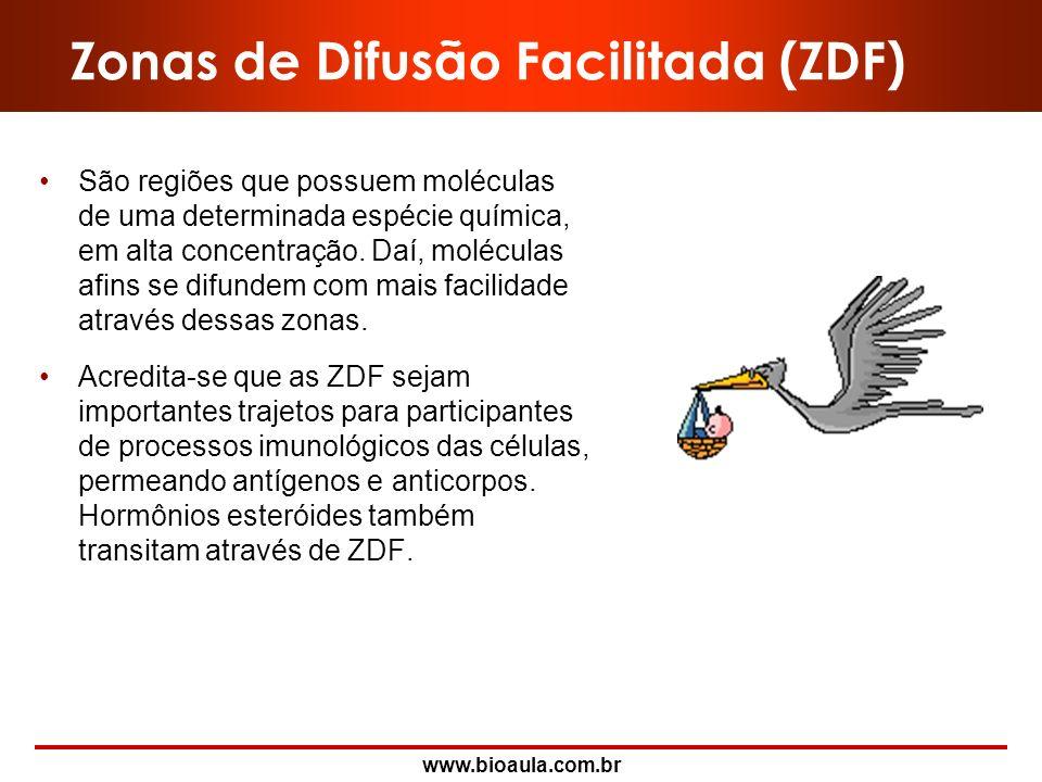 Zonas de Difusão Facilitada (ZDF)
