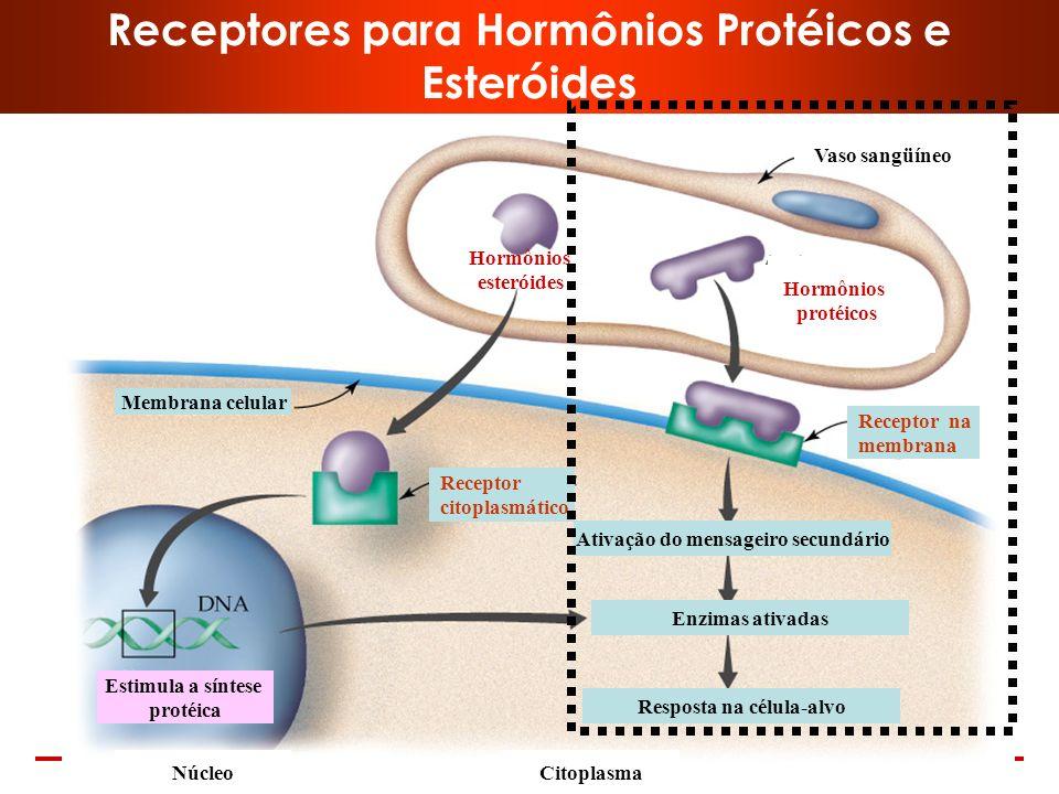 Receptores para Hormônios Protéicos e Esteróides