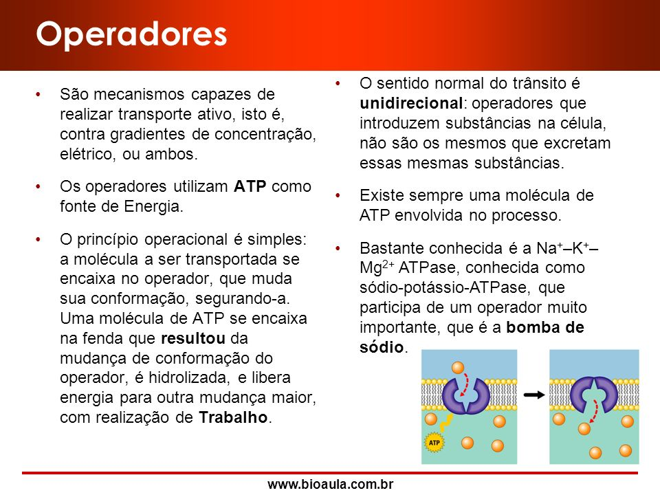 Operadores São mecanismos capazes de realizar transporte ativo, isto é, contra gradientes de concentração, elétrico, ou ambos.