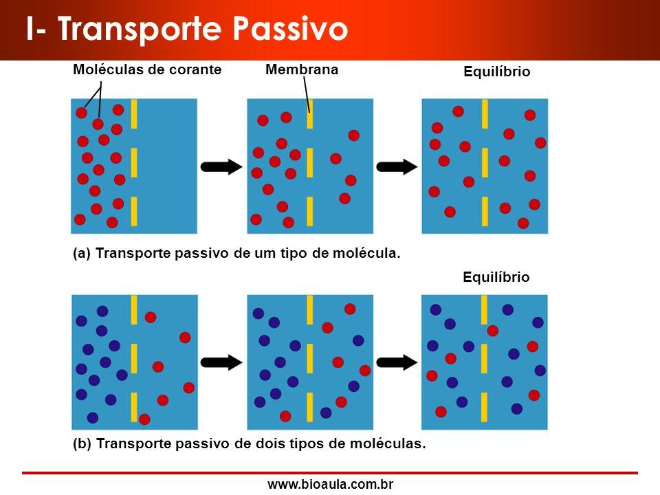 I- Transporte Passivo Moléculas de corante Membrana Equilíbrio