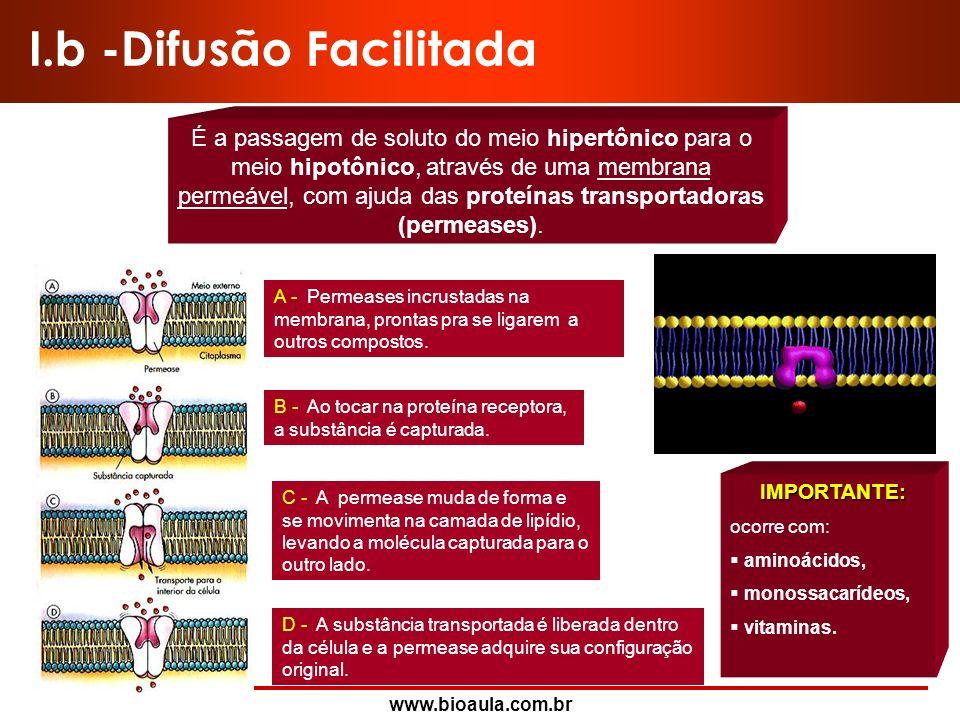 I.b -Difusão Facilitada