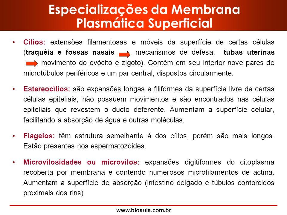 Especializações da Membrana Plasmática Superficial