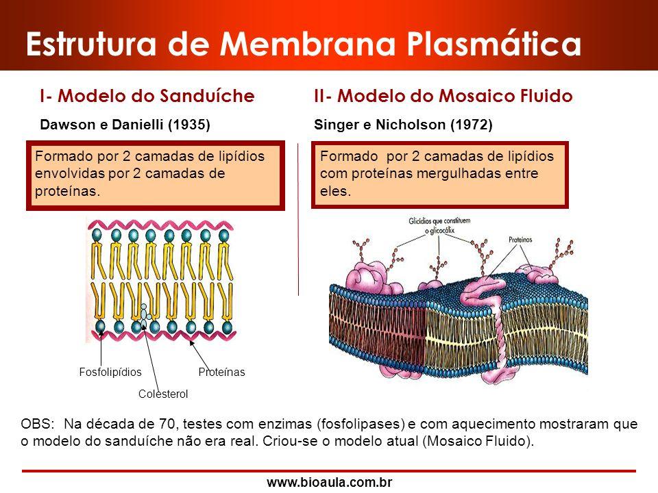 Estrutura de Membrana Plasmática