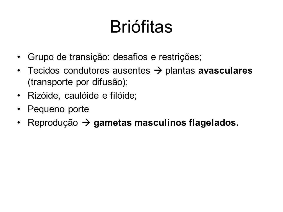 Briófitas Grupo de transição: desafios e restrições;