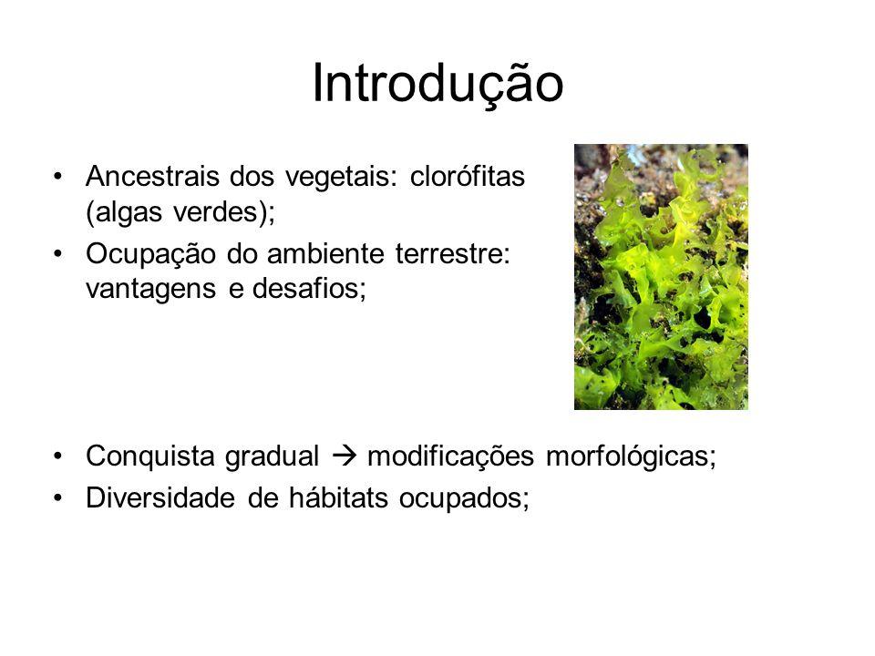 Introdução Ancestrais dos vegetais: clorófitas (algas verdes);