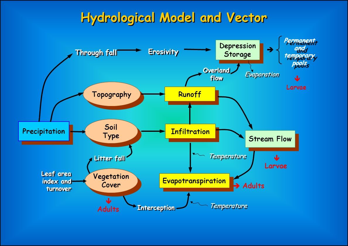 Hydrological Model and Vector