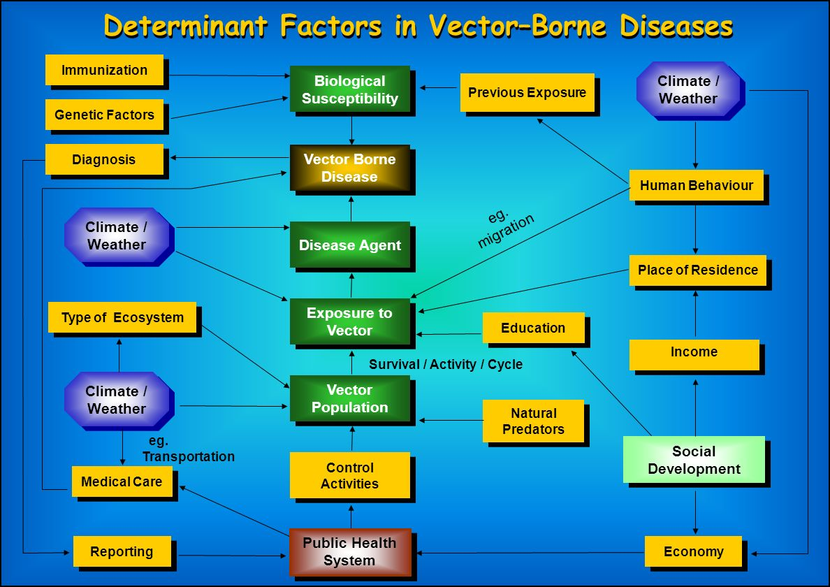 Determinant Factors in Vector–Borne Diseases