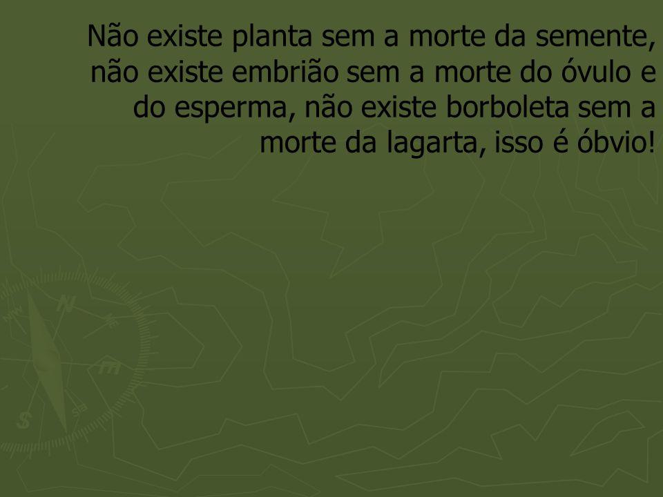 Não existe planta sem a morte da semente, não existe embrião sem a morte do óvulo e do esperma, não existe borboleta sem a morte da lagarta, isso é óbvio!