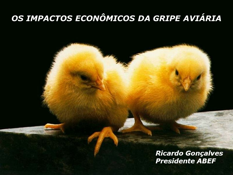 OS IMPACTOS ECONÔMICOS DA GRIPE AVIÁRIA