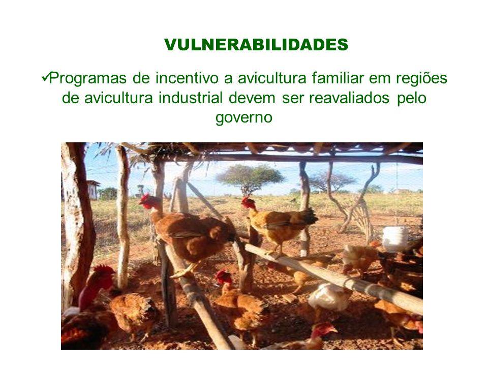 VULNERABILIDADESProgramas de incentivo a avicultura familiar em regiões de avicultura industrial devem ser reavaliados pelo governo.