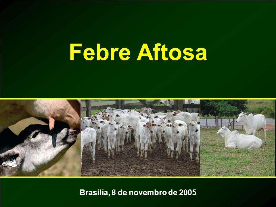 Brasília, 8 de novembro de 2005