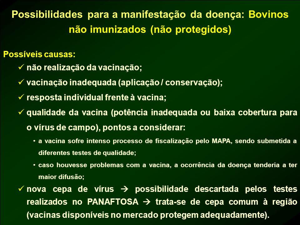Possibilidades para a manifestação da doença: Bovinos não imunizados (não protegidos)