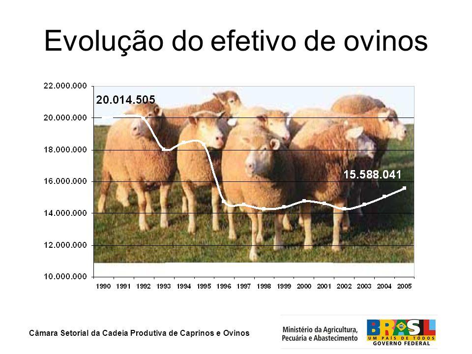Evolução do efetivo de ovinos
