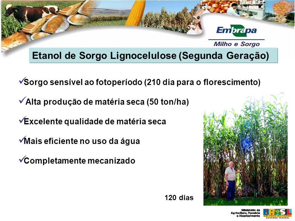 Etanol de Sorgo Lignocelulose (Segunda Geração)