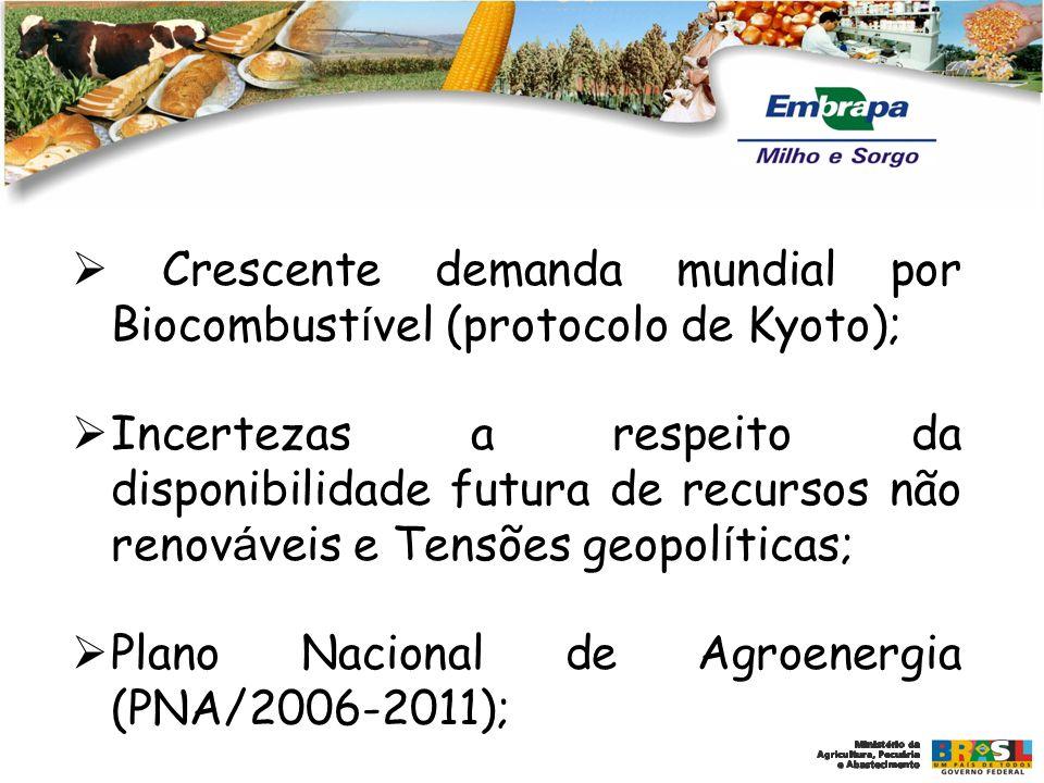  Crescente demanda mundial por Biocombustível (protocolo de Kyoto);