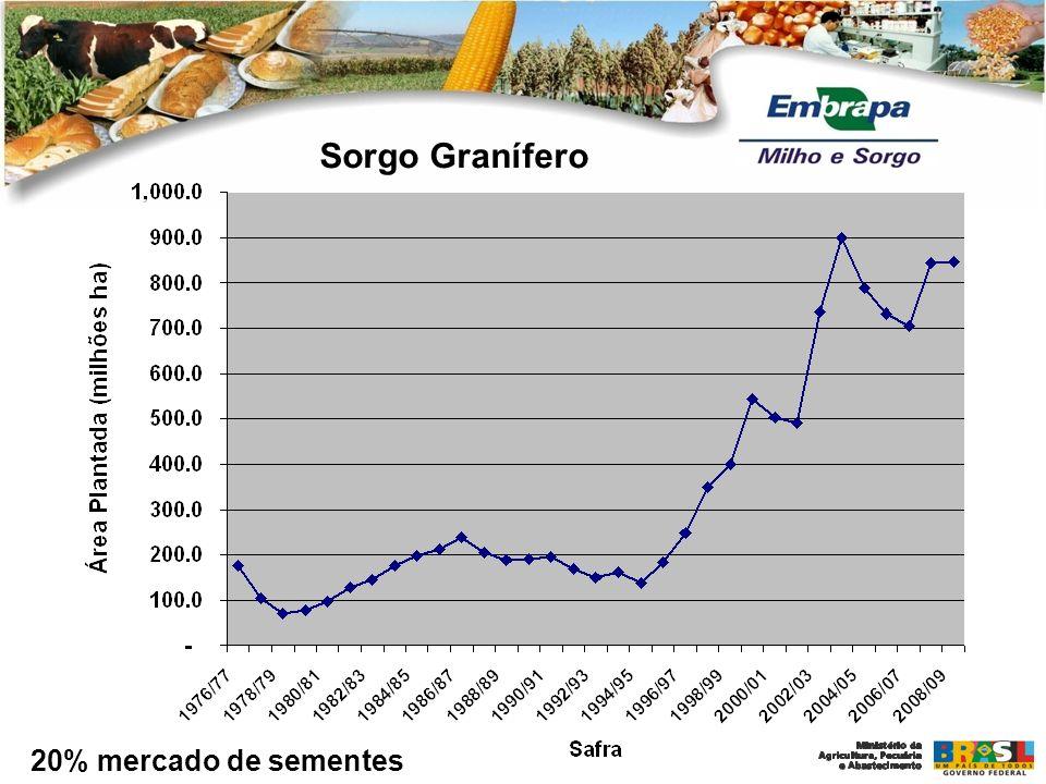 Sorgo Granífero 20% mercado de sementes