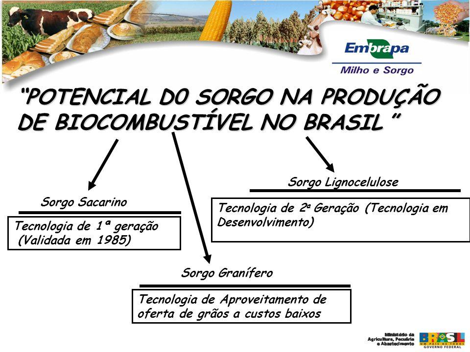 POTENCIAL D0 SORGO NA PRODUÇÃO DE BIOCOMBUSTÍVEL NO BRASIL