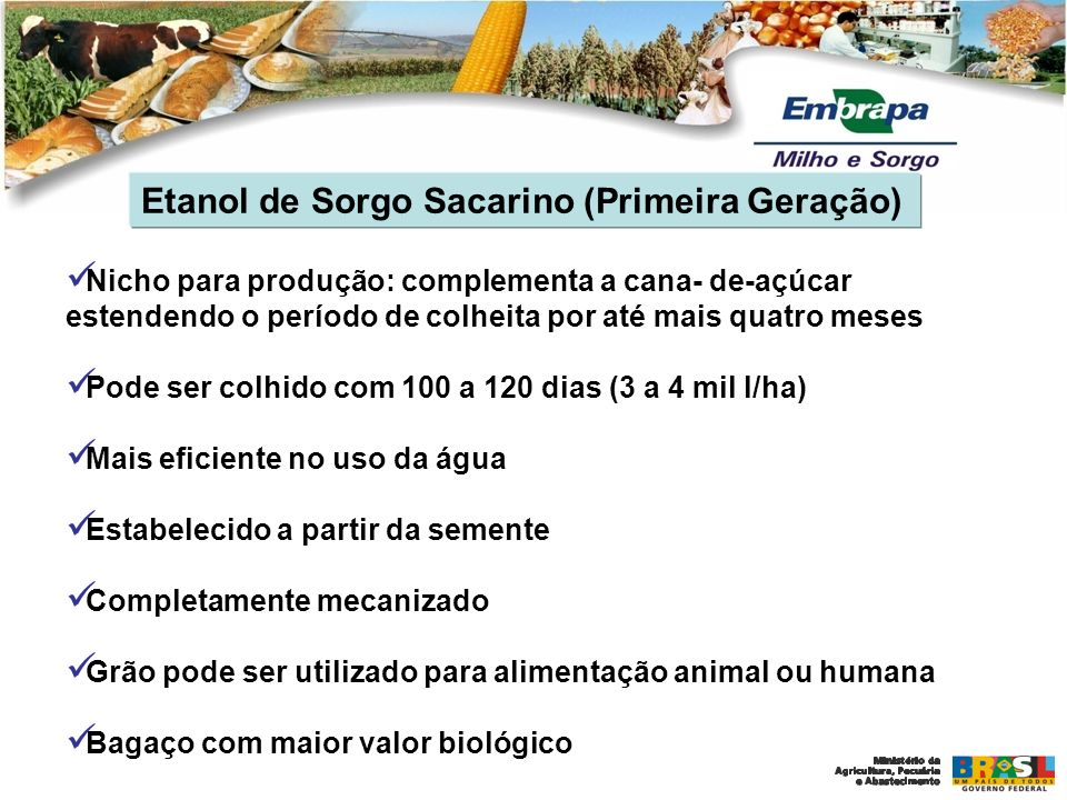 Etanol de Sorgo Sacarino (Primeira Geração)
