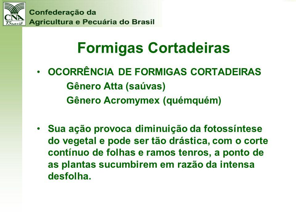 Formigas Cortadeiras OCORRÊNCIA DE FORMIGAS CORTADEIRAS