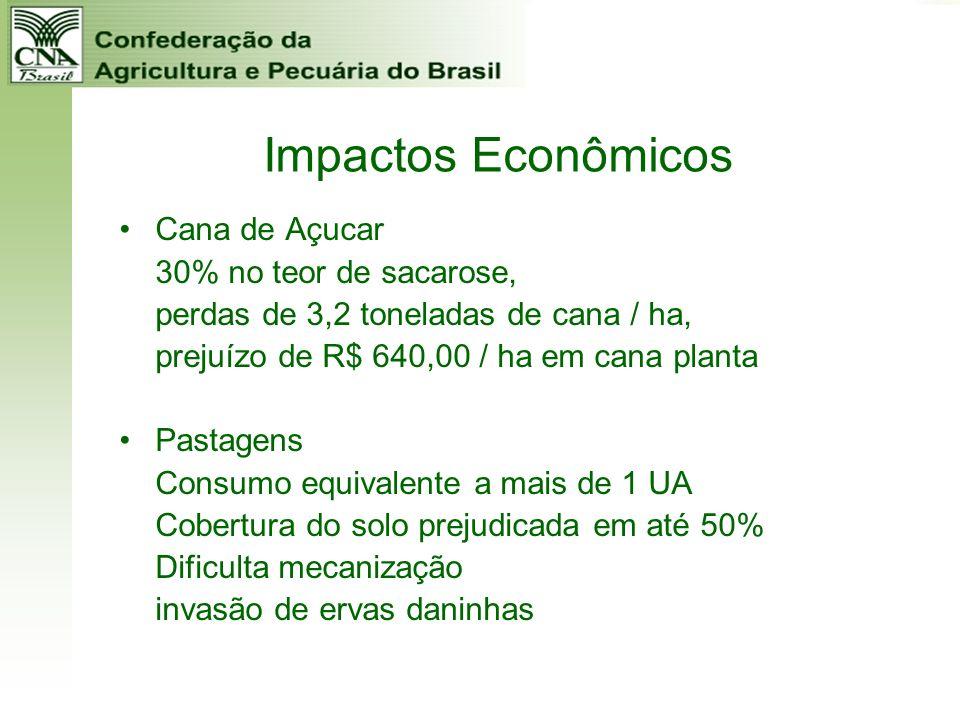 Impactos Econômicos Cana de Açucar 30% no teor de sacarose,