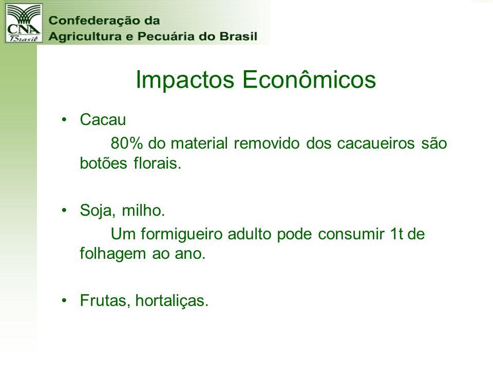 Impactos Econômicos Cacau