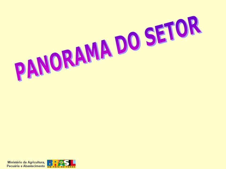 PANORAMA DO SETOR