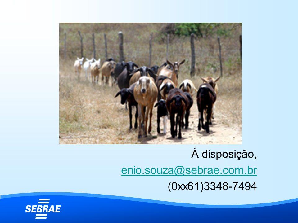 À disposição, enio.souza@sebrae.com.br (0xx61)3348-7494