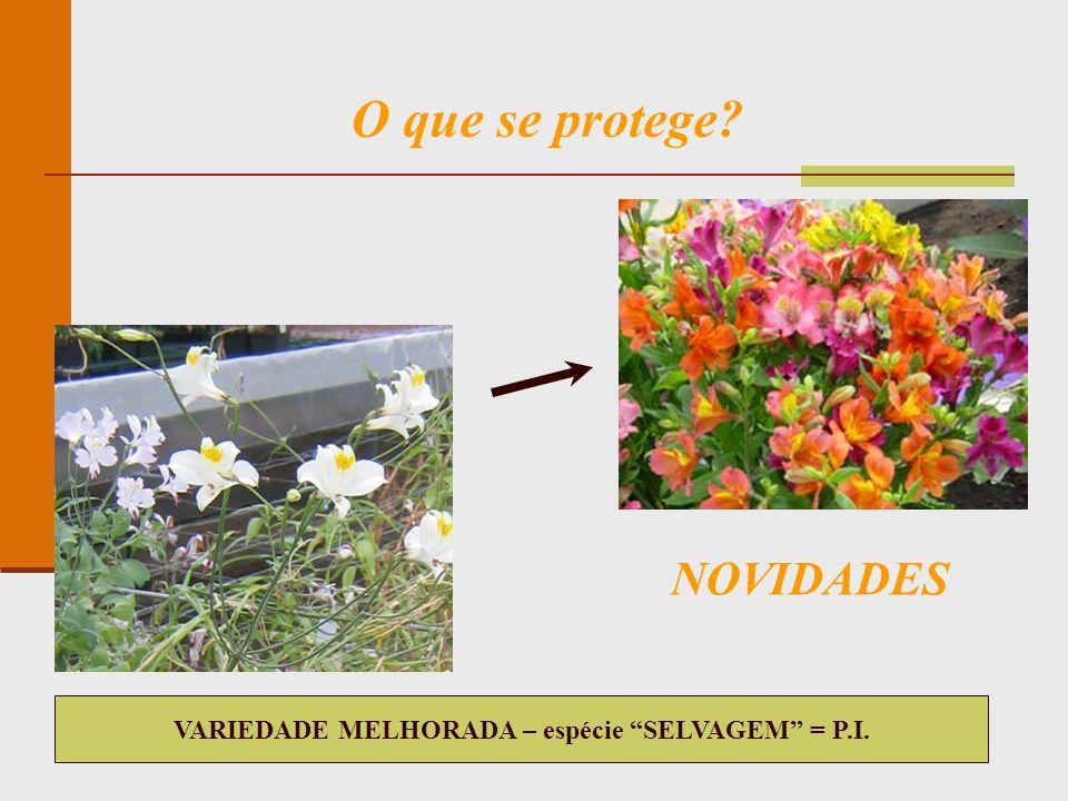 VARIEDADE MELHORADA – espécie SELVAGEM = P.I.