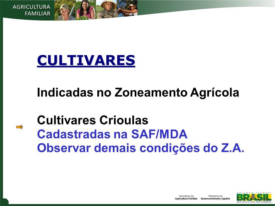 CULTIVARES Indicadas no Zoneamento Agrícola Cultivares Crioulas