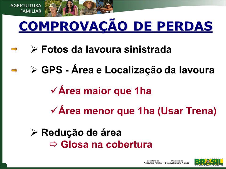 COMPROVAÇÃO DE PERDAS Fotos da lavoura sinistrada